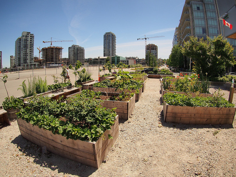Gardening boxes on a green roof in a city
